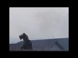 Шмель влетел в окно(с)