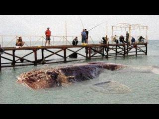 8 Самых Жутких Существ, Найденных в Океане