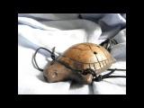 Handbuild clay Turtle 7-hole ocarina, double milk firing, unique shamanic totem musical instrument