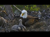 AEF DC EAGLE CAM 5.14.17 Mother's Day 2017