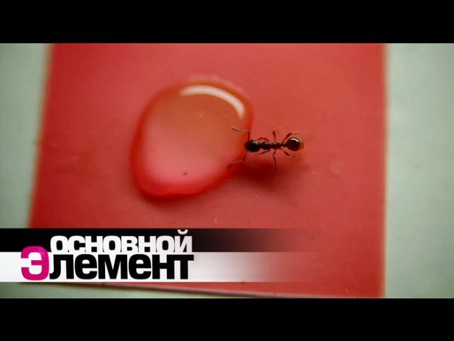 Мир муравьев Основной элемент