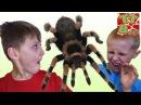 ПРАНК от Человека Паука Розыгрыш для Игорька и Богдана Видео для детей SPIDERMAN Prank