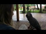Попугай копирует Окей гугл и это жесть как похоже! parrot imitates OK Google and its amazing