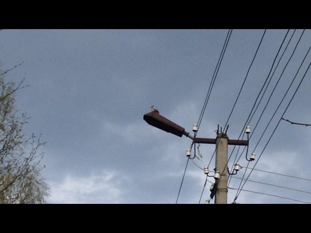 Дятел долбит по фонарю, Конаковский Мох, Тверская область