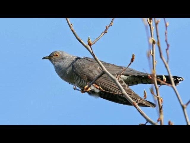 Древесные птицы и их образ жизни (рассказывает орнитолог Евгений Коблик)