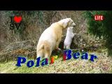 The Polar Bear, Zoo