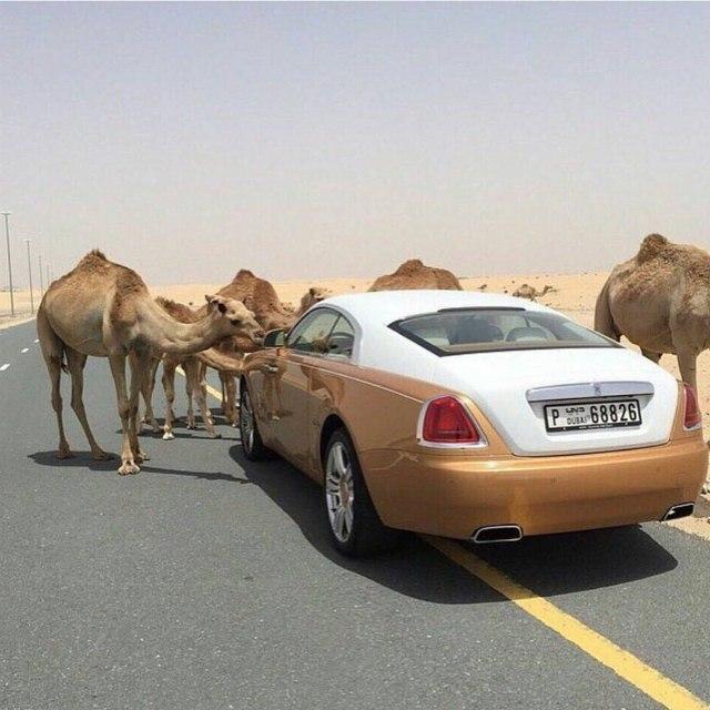 Фотографии арабских мажоров из сообщества Rich Kids of Dubai