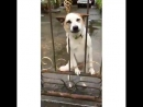 Собачья радость 🐶
