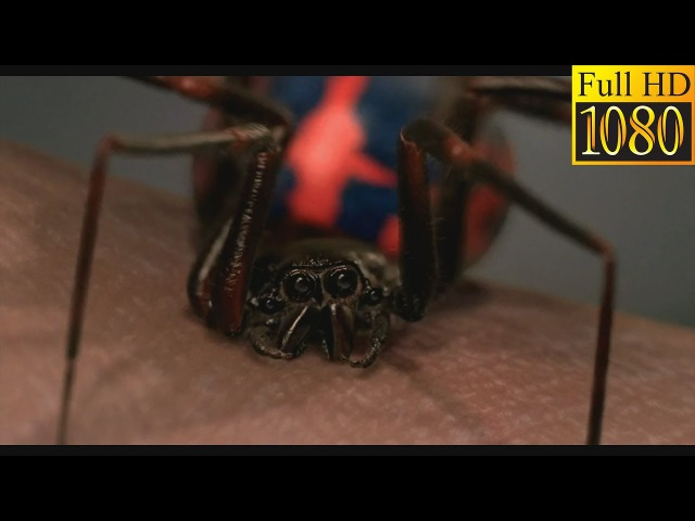 Пітера Паркера кусає павук. Людина - Павук (2002) (Full HD)