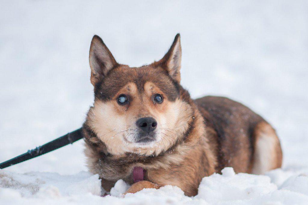 Хозяев для слепого пса Волчка ищут волонтеры из приюта «Искра»