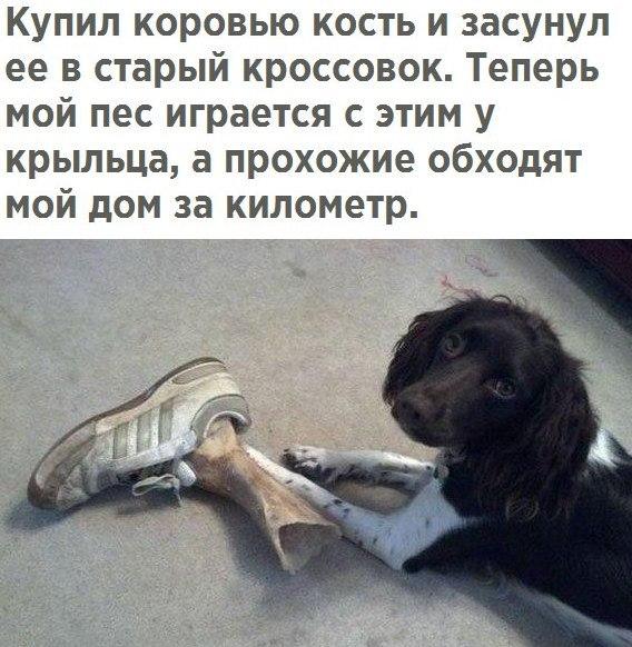https://pp.userapi.com/c836231/v836231276/4cb5e/Wgf5y7oedvE.jpg