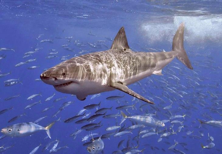 музеи акулы культура зоопарк выставки курьерская служба экспресс-доставка QDel