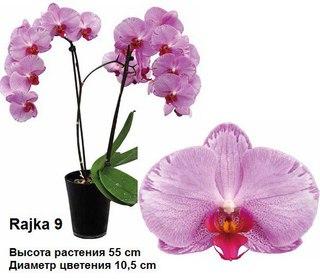 Купить подростки орхидей в контакте