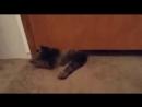 Жидкий кот..............)))