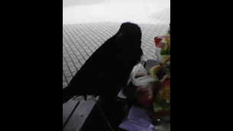 Завтрак на природе с друзьями и Вороном Ванхельсингом и котом майкуном Бегимотом 18 6 17