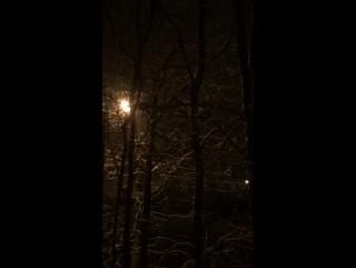 Начало зимы... Тихо падает снег... и лает собачка...