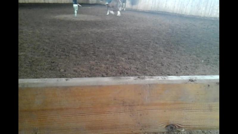 Тренировка в Вятских полянах. Гостомель. (23.07.17)