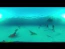 Wylsacom В Сочи скормили акулам популярного блогера Видео 360