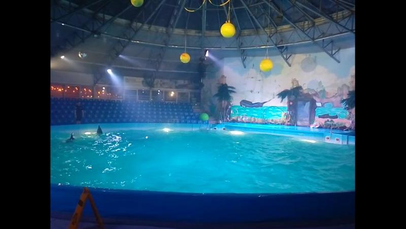 Дельфинчики Часть 1 Ночное романтическое шоу в Дельфинарии Немо