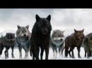 WOLF LAW ВОЛЧИЙ ЗАКОН! Зарубежный фильм