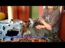 Кот радуется что его забрали домой из приюта Приют дари добро Новосибирск