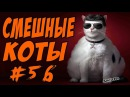 Приколы с котами до слёз cмешные коты видео кошки 2017