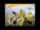 Польза и возможный вред пророщенных семян подсолнечника