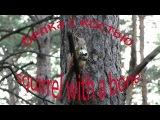 Белка с костью | Squirrel with a bone
