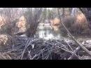 Таежный поход на хрустальную плотину бобра. Тайга, Сибирь, Рыбалка,охота ,выжива ...