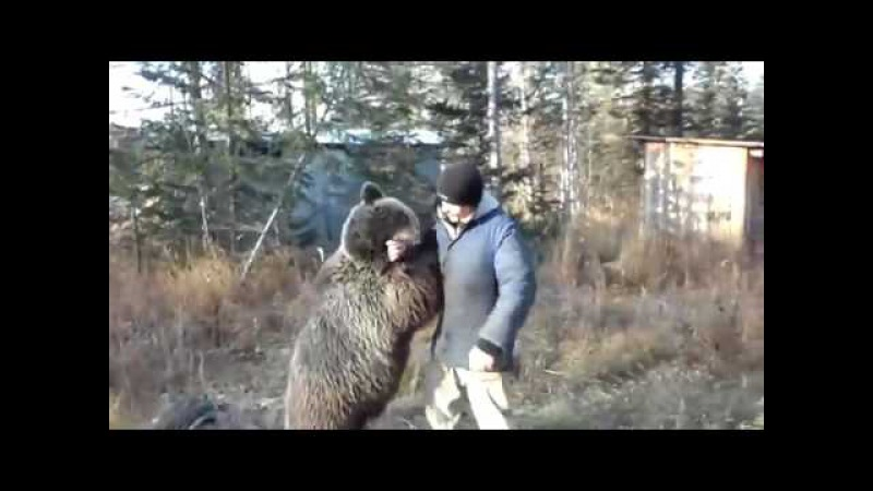 вахтовики сняли уникальное видео о невероятно добродушном диком медведе