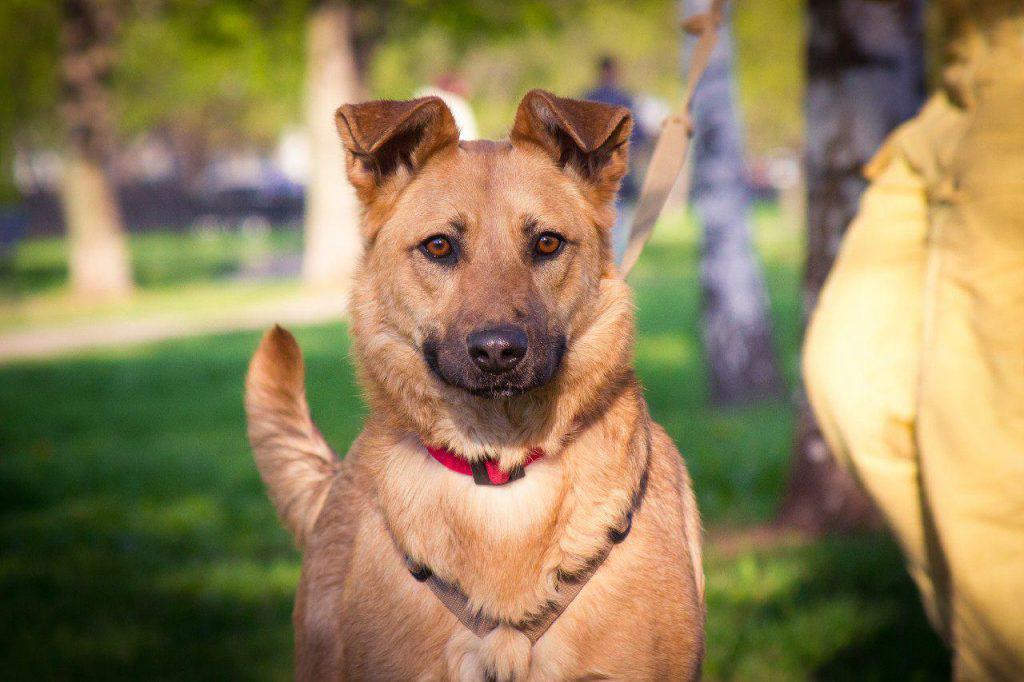 Хозяев ищет собака по кличке Раста из приюта «Искра»