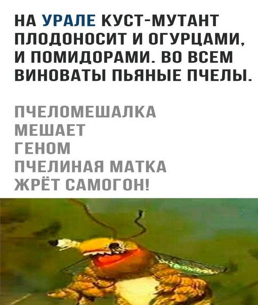 Фото №456252780 со страницы Алексея Загорского