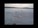 Рыбалка на озере Торма 02 04 2017