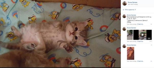 https://vk.com/id40945855 наплодила ОТ КОТЕНКА кучу котят выставила на