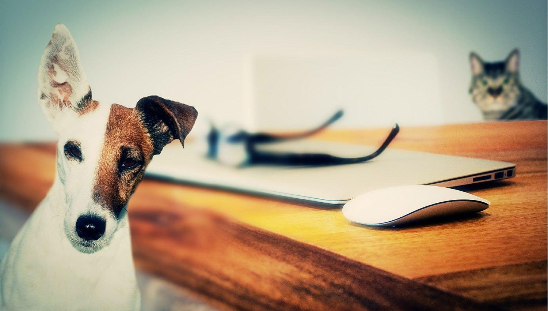Переводчик для домашних животных появится в ближайшие 10 лет