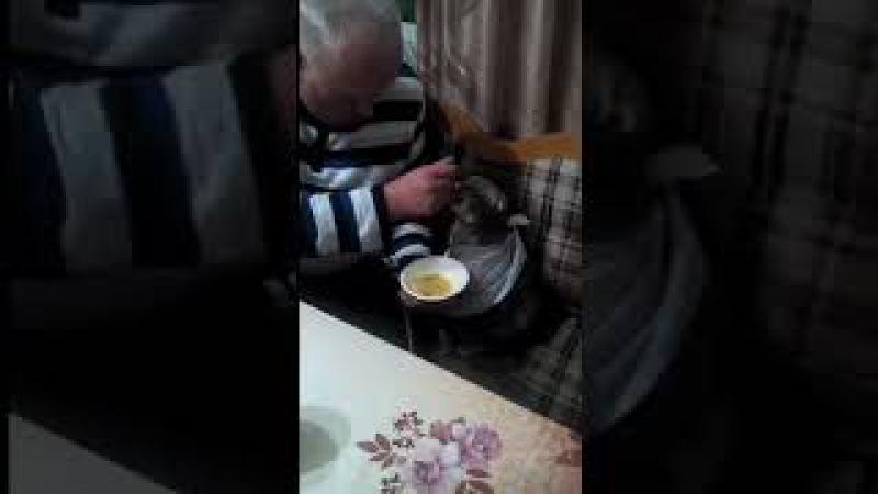 Хозяин кормит своего кота с ложечки