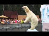 Zoo Novosibirsk  Polar Bear