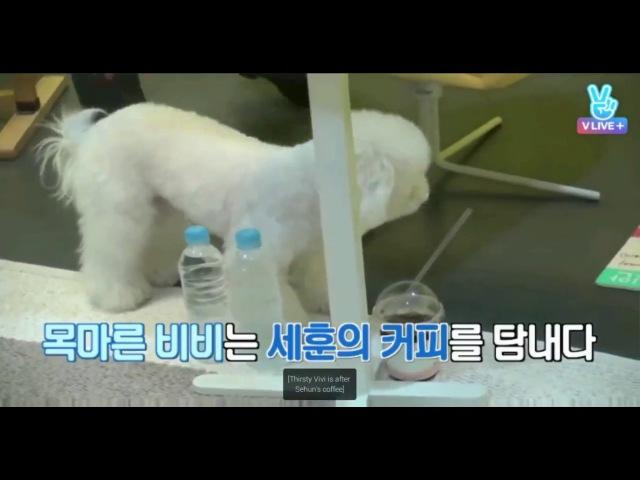 [ENG SUB] EXO MENTARY Vehind Baekhyun Sehun