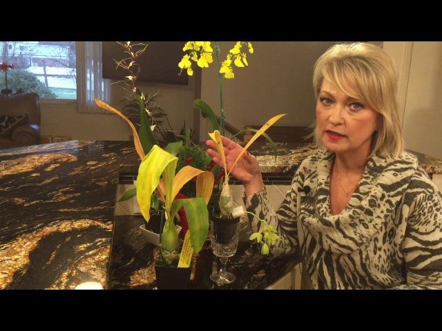 Орхидея Катасетум: немного об уходе
