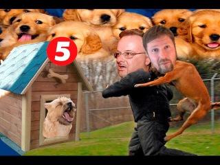 Собаки канала Порошенко