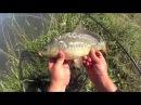 Рыбалка на фидер ДР