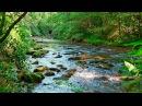 Sonidos del Bosque Relajarse Sonidos de la Naturaleza