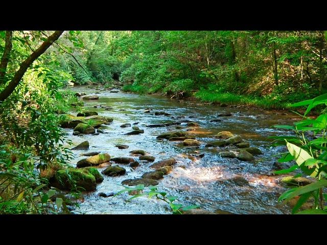 Sonidos del Bosque - Relajarse - Sonidos de la Naturaleza