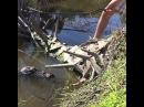That's a pretty cool gator