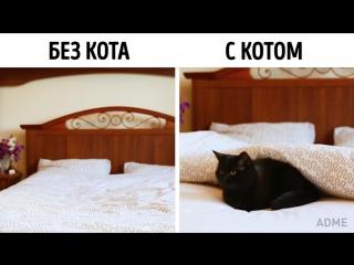Жизнь не та без КОТА :)
