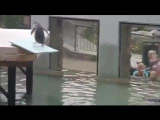 Фули так высоко (VHS Video)