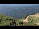 admire horse and nature beauty. @Rosa Peak