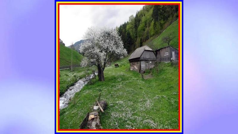 Petrica Mitu Stoian Inflorira pomii iara