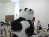 АСЕМ//шоу панды и медведь