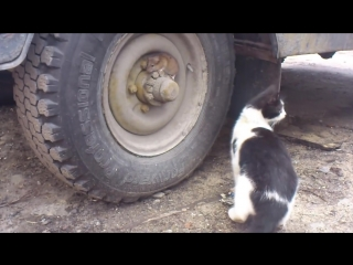 Том и Джерри (русская_беспощадная_версия)  (6 sec)